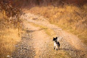 psík na cestě