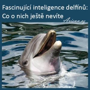 Fascinující inteligence delfínů: Co o nich ještě nevíte